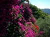 villa gnocchi - giardino11