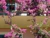 villa gnocchi - giardino12